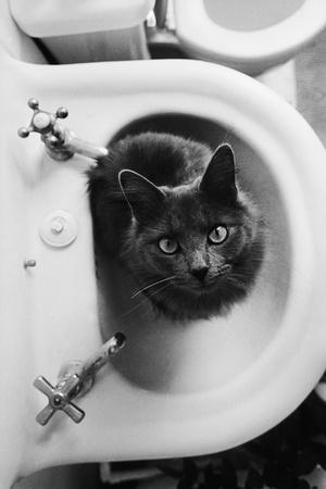 Cat Sitting In Bathroom Sink