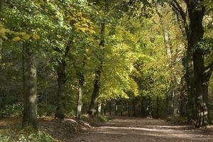 Autumn Trees in Hampstead Heath by Natalie Tepper