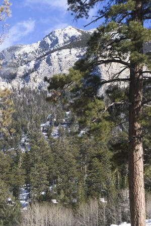 Las Vegas Ski and Snowboard Resort, Mt Charleston, Near Las Vegas, Nevada, United States by Natalie Tepper