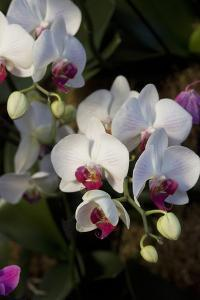 Orchids on Display, London by Natalie Tepper