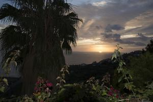 Sunset from Gardens over the Sea, Funchal, Madeira, Portugal. Palm Trees and Flowers in View by Natalie Tepper