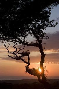 Sunset over the Atlantic, Wooda Farm Near Bude, Cornwall, UK by Natalie Tepper