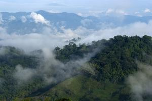 Valley from Hacienda El Caney (Plantation), in the Coffee-Growing Region, Near Manizales, Colombia by Natalie Tepper