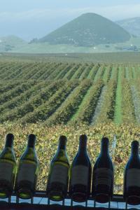 Winery, San Luis Obispo, California, Usa by Natalie Tepper