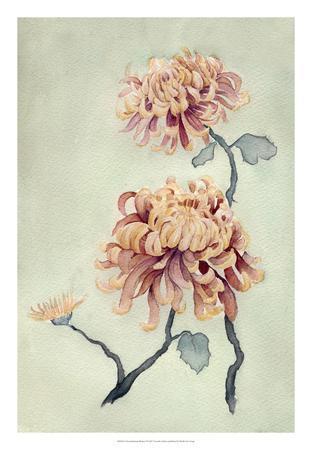 Chrysanthemum Beauty I