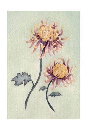Chrysanthemum Beauty II