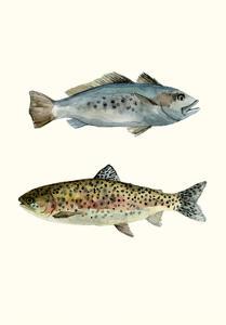 Fish Grouping 1 by Natasha Marie