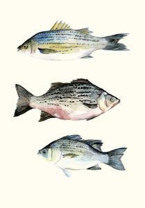 Fish Grouping 2 by Natasha Marie