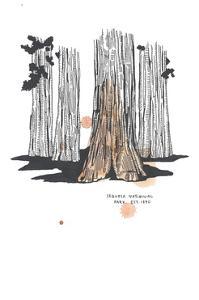 Nation Park Sequoia by Natasha Marie
