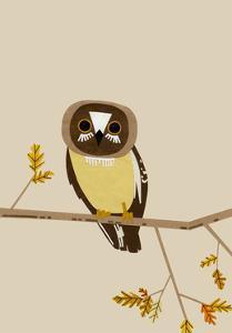 Owl by Natasha Marie