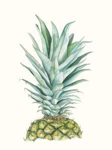 Tropical Botanicals 6 by Natasha Marie