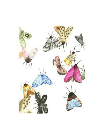 watercolor moths 1