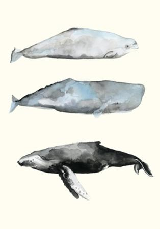 Whale Grouping 1 by Natasha Marie