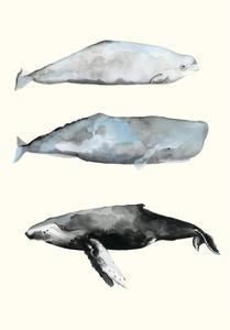 Whale Grouping 1 by Natasha Marie