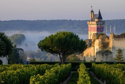 Castle of Chinon Among the Vineyards, Chinon, Indre Et Loire, Centre, France
