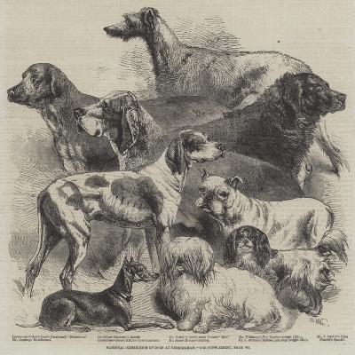 National Exhibition of Dogs at Birmingham-Harrison William Weir-Giclee Print