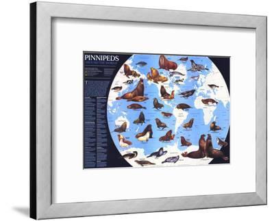 1987 Pinnipeds Around the World Map