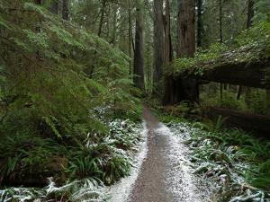 A Rare Dusting of Snow in Del Norte Redwoods State Park by National Geographic Photographer
