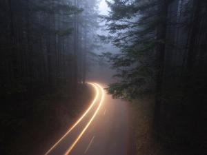 Fog Shrouds a Forest Road in Redwood National Park by National Geographic Photographer