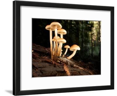 Mushrooms and a Pacific Giant Salamander