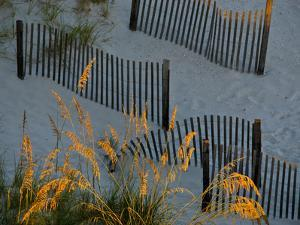 Sunlight on Beach Grass by National Geographic Photographer