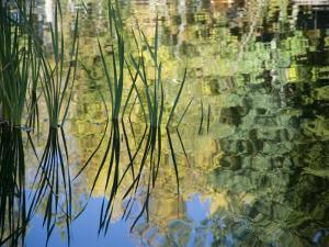 Trees and Grasses Reflected in a Pond in Grand Teton National Park by National Geographic Photographer