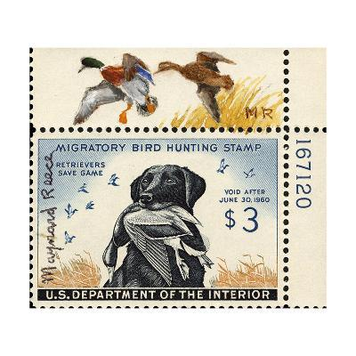 National Postal Museum: 3 Dollar Duck Stamp Remarque--Art Print