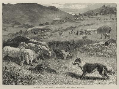 National Sheep-Dog Trials at Bala, North Wales, Penning the Sheep-Samuel Edmund Waller-Giclee Print