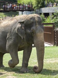 National Zoological Park: Asian Elephant