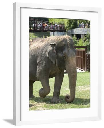 National Zoological Park: Asian Elephant--Framed Photographic Print