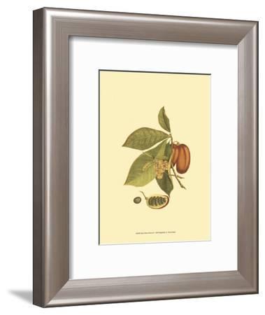 Native Fruits IV--Framed Art Print