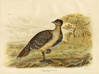 Native Pheasant or Malleefowl, 1891-Gracius Broinowski-Giclee Print
