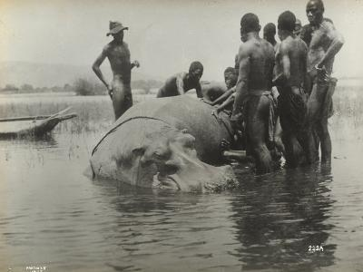 Natives During the Capture of a Hippopotamus--Photographic Print