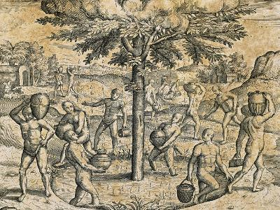 Natives of the Canary Islands, 1590-Theodore de Bry-Giclee Print