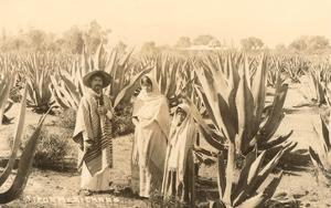 Natives on Maguey Plantation, Mexico