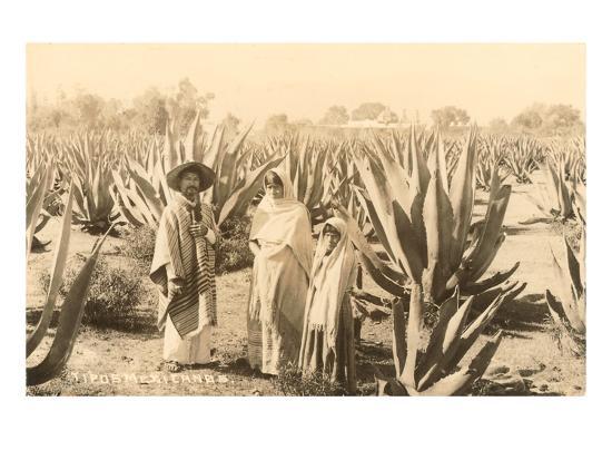 Natives on Maguey Plantation, Mexico--Art Print