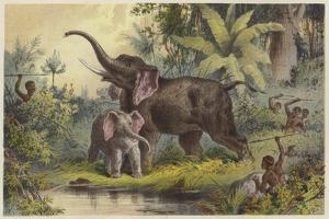 Natives Spearing an Elephant