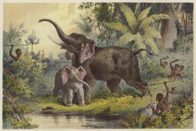 Natives Spearing an Elephant--Giclee Print