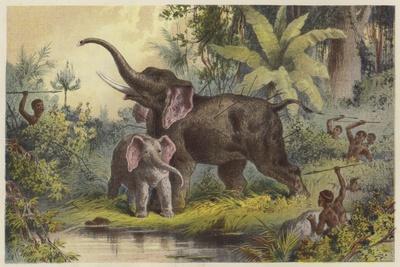 https://imgc.artprintimages.com/img/print/natives-spearing-an-elephant_u-l-pppq4e0.jpg?p=0