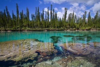 Natural Aquarium New-Caledonia.-Mako photo-Photographic Print