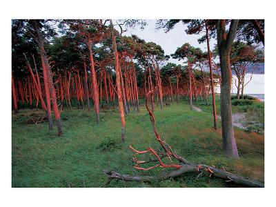 Natural Bark Erosion--Art Print