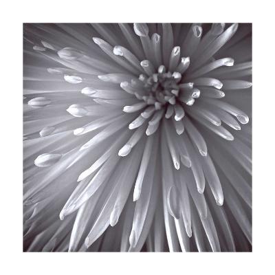 Natural Designs II-Assaf Frank-Giclee Print
