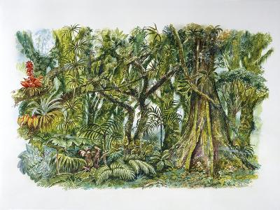 Natural Environments - African Misty Forest--Giclee Print