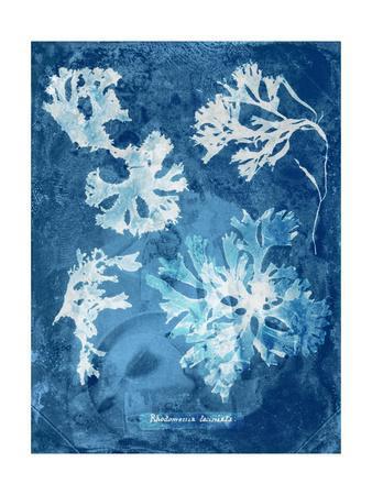 https://imgc.artprintimages.com/img/print/natural-forms-blue-1_u-l-q1bmwxp0.jpg?p=0