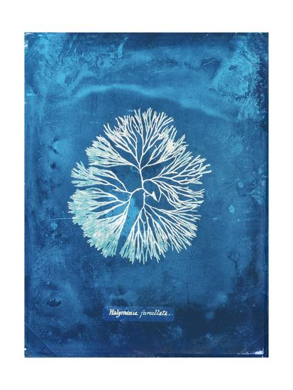 Natural Forms Blue 6-THE Studio-Premium Giclee Print