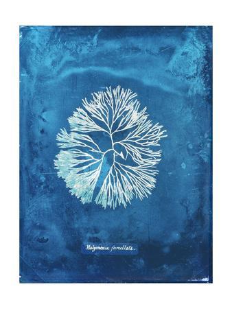 https://imgc.artprintimages.com/img/print/natural-forms-blue-6_u-l-q1bmwr40.jpg?p=0