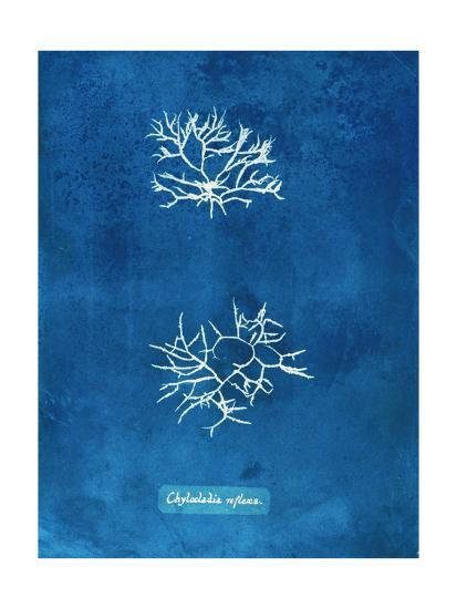 Natural Forms Blue 7-THE Studio-Premium Giclee Print