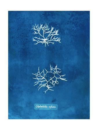 https://imgc.artprintimages.com/img/print/natural-forms-blue-7_u-l-q1bmwuj0.jpg?p=0