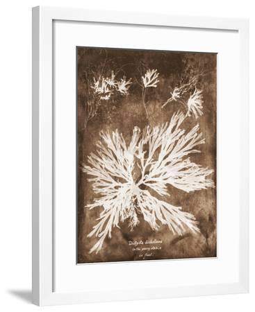 Natural Forms Sepia 3-THE Studio-Framed Premium Giclee Print