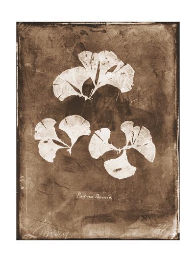 Natural Forms Sepia 4-THE Studio-Premium Giclee Print